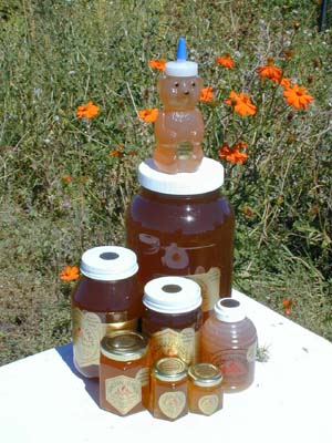 Honey 12 lb. Gallon - California Wildflower